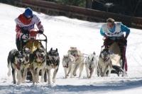 Fotografia z pretekov psích záprahov v roku 2011, zdroj: sleddog.sk